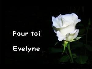 Angel30407 vip blog com 750951medium rose blanche 2